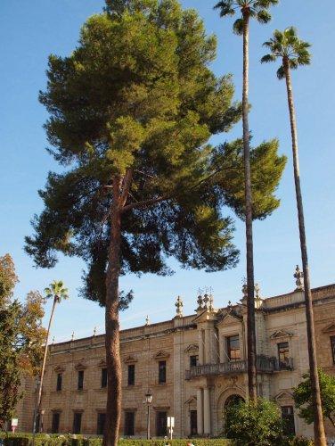 jardines de Sevilla Universidad